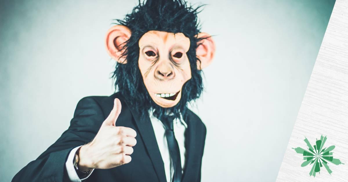 Sono il tuo scimpanzé e ti salvo la vita!
